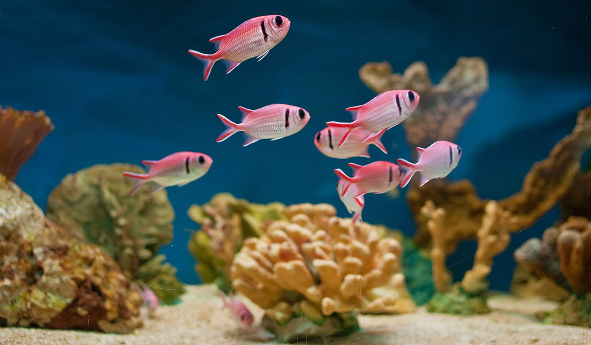 Photo of a beautiful fish tank with happy fish
