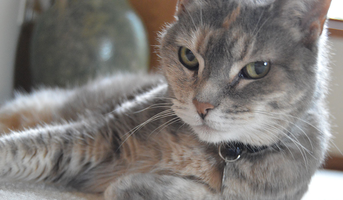Photo of cat posing for the camera