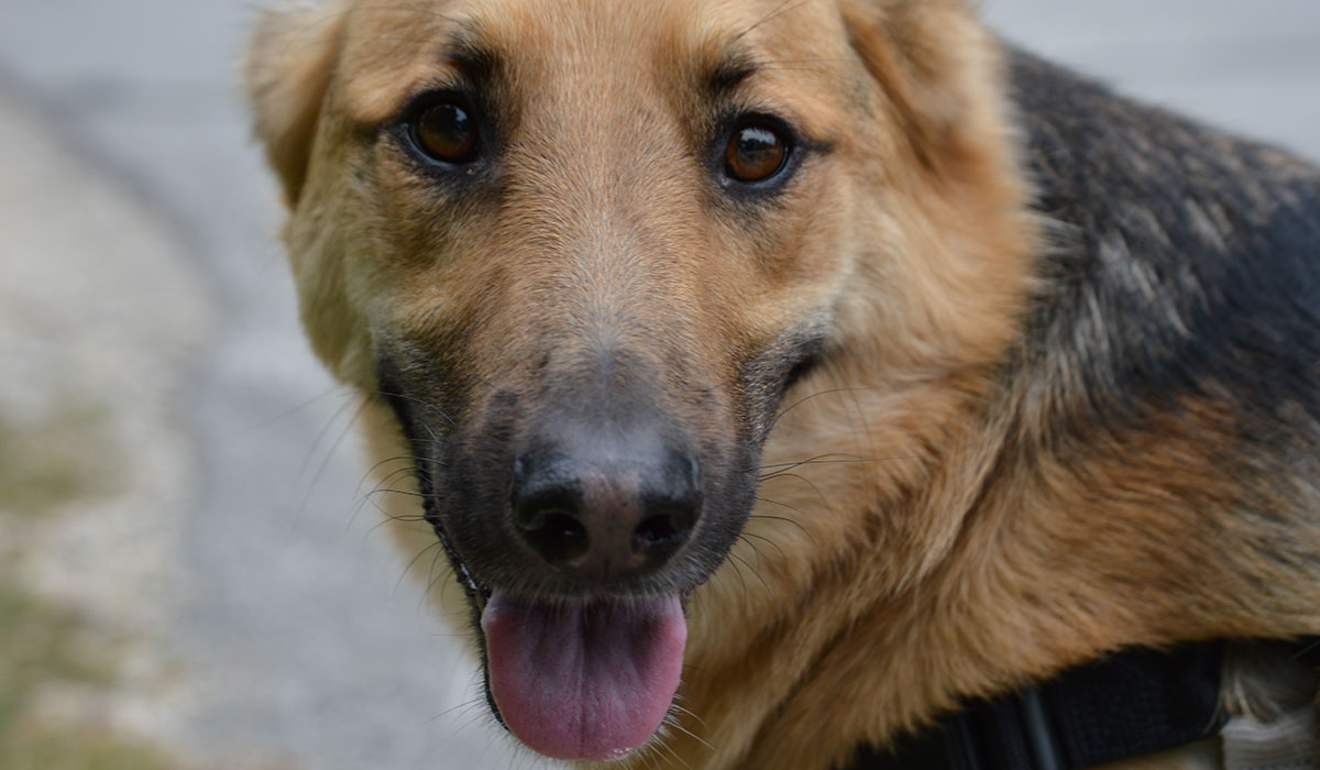 Service Dogs For Free In Nashville