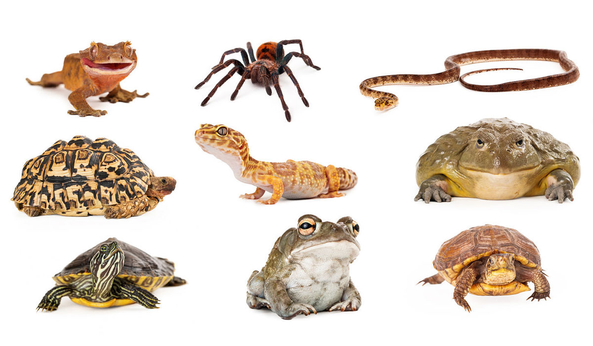 Photo montage of various critters