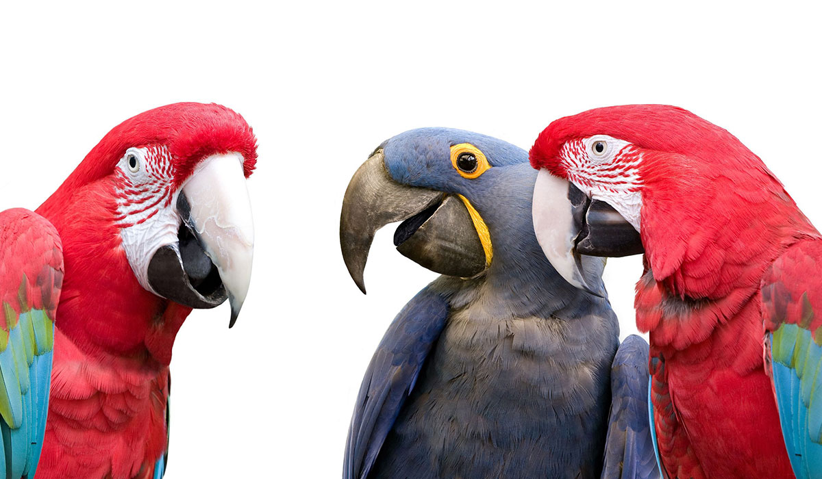 Photo of 3 parrots talking to each other