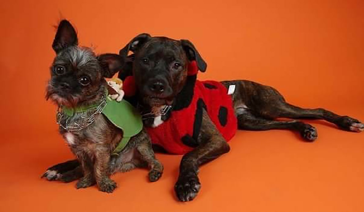 Photo of 2 dogs dressed up for Halloween