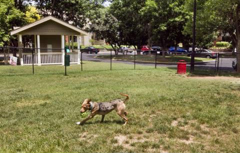 Photo of a dog playing in the years of Arbors of Brentwood