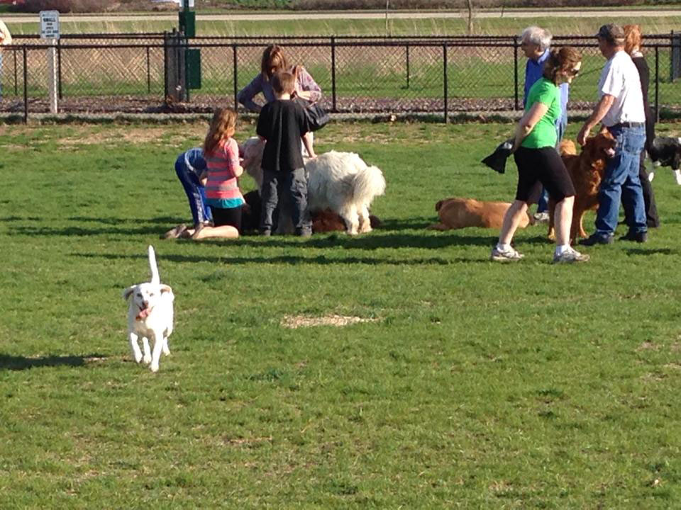 Photo of dogs playing at Bark Park in Carol Stream, IL