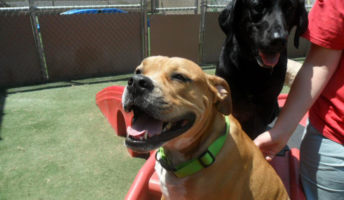 Photo of happy dogs at Camp Bow Wow