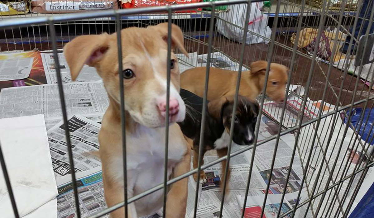 Photo of some loving dogs waiting to be adopted