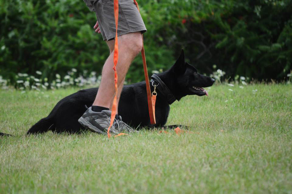 Photo of a dog being trained
