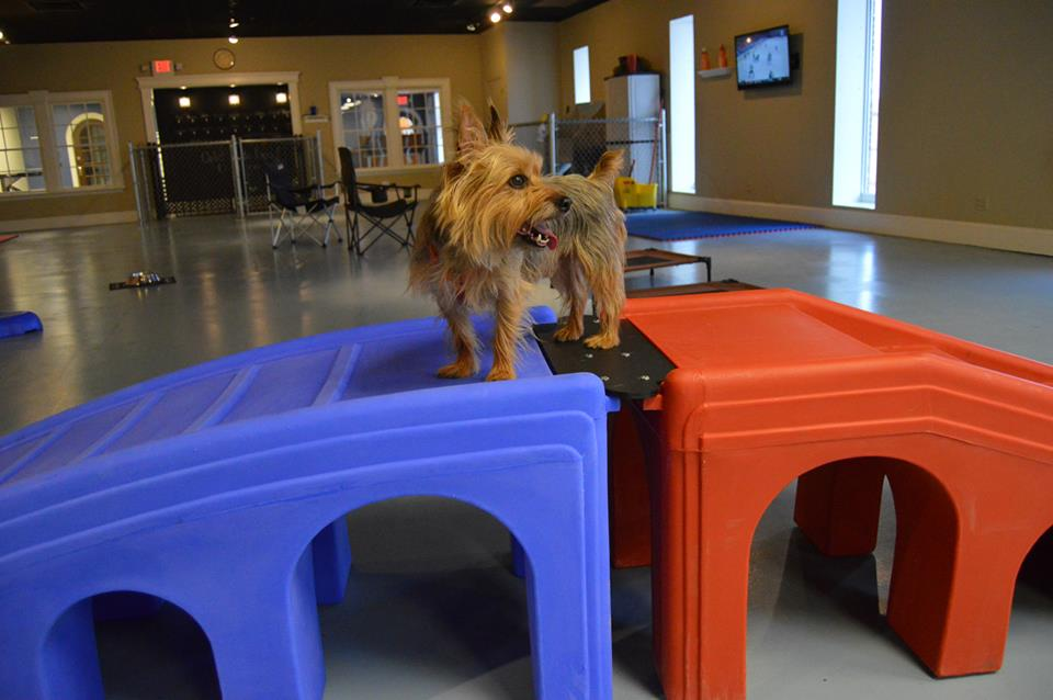 Dog playing at day care