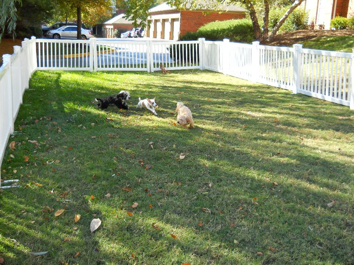 Dogs hanging out in the grass at The Grove