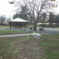 Photo of a dog running inside Two Rivers Dog Park