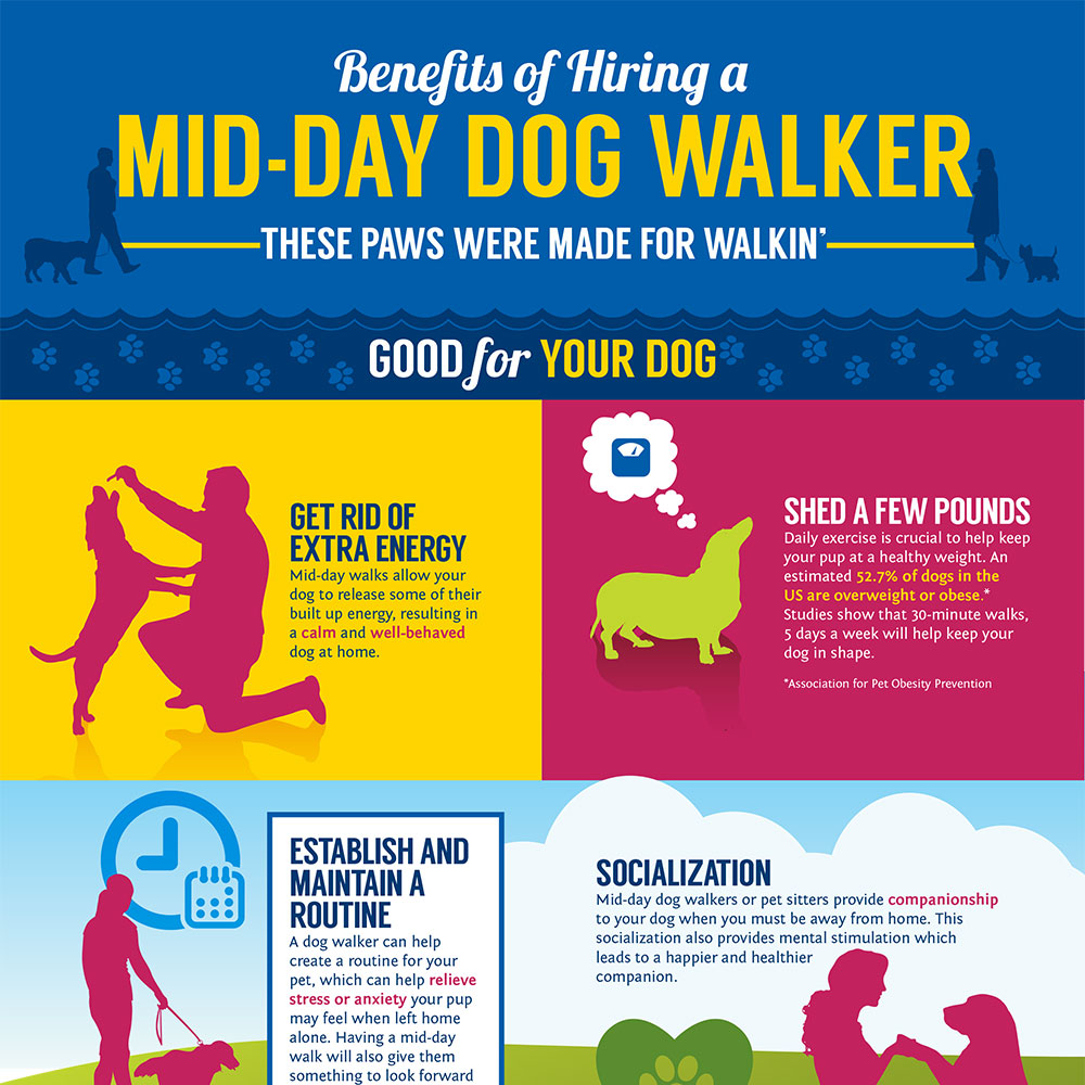 Photo of a section of the Mid-Day Dog Walker Infographic