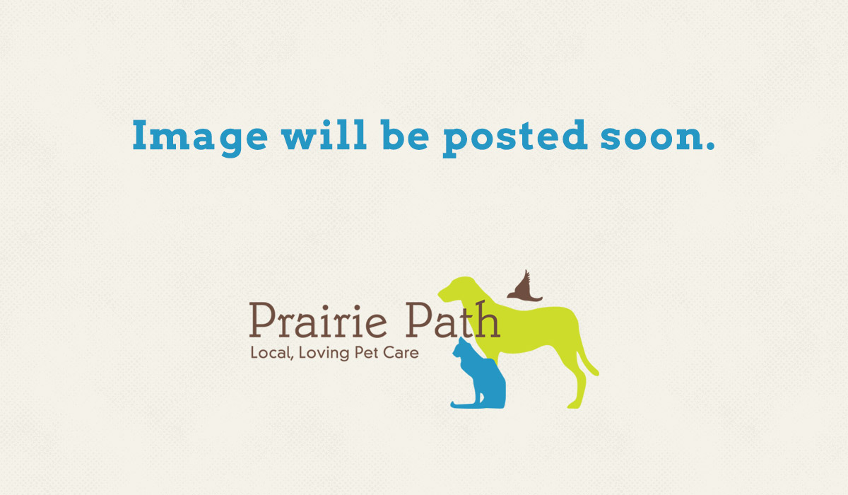 Illustrated Prairie Path Pet Care logo