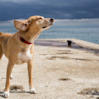 Dog on the beach for a weekend pet friendly getaway