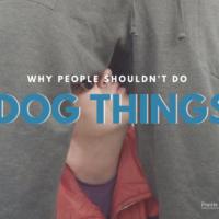 People shouldn't do dog things
