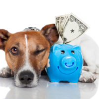 Saving money with a Pet